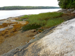 Meditation - Damariscotta